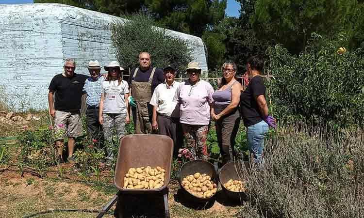 Βιολογικές πατάτες από τους «Αγρόσχολους» Βριλησσού στο Κοινωνικό Παντοπωλείο του Δήμου Βριλησσίων