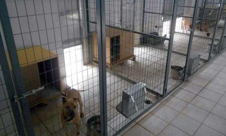 Χρήματα από το «Αντ. Τρίτσης» για δημιουργία καταφυγίου αδέσποτων ζώων ζητεί ο Δήμος Αγ. Παρασκευής