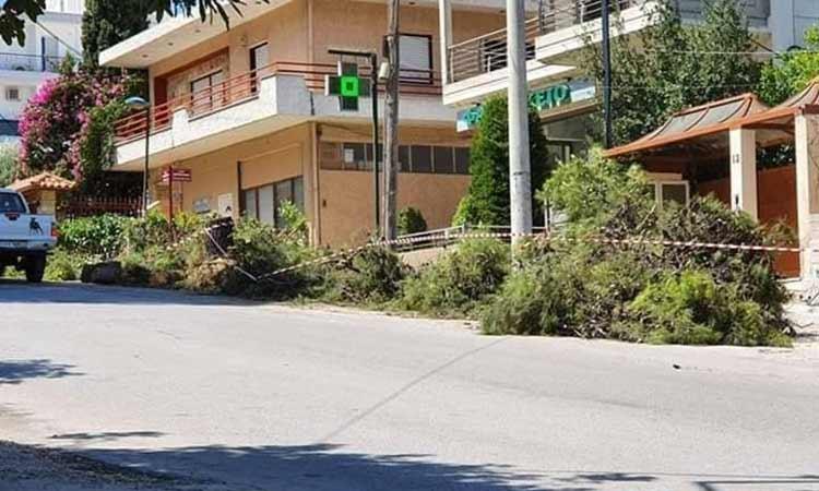 Κατά της κοπής δύο αιωνόβιων πεύκων στη Μεταμόρφωση η Πράσινη Πόλη