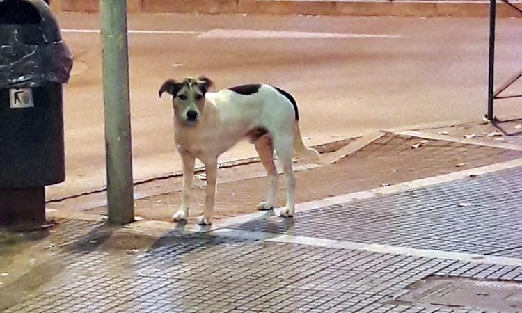 Επίθεση από αδέσποτο σκύλο δέχθηκαν παιδιά στα Μελίσσια