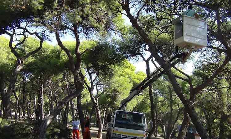Τ. Μαυρίδης: Η προστασία των δασών απαιτεί σοβαρότητα, επιστημονική γνώση και δουλειά