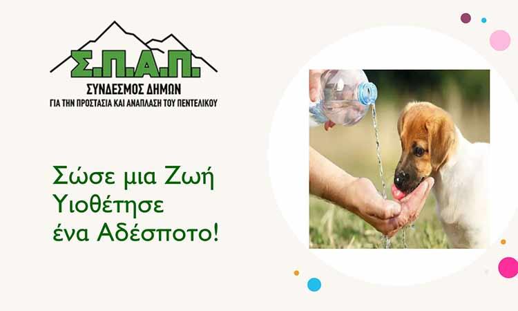 Μήνυμα Βλ. Σιώμου για την Παγκόσμια Ημέρα Αδέσποτων Ζώων