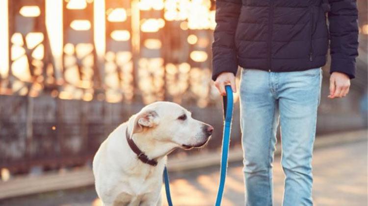 Αρμοδιότητες, χρηματοδότηση, αλλά και «πέναλτι» στους Δήμους για να διαχειριστούν το θέμα των ζώων συντροφιάς