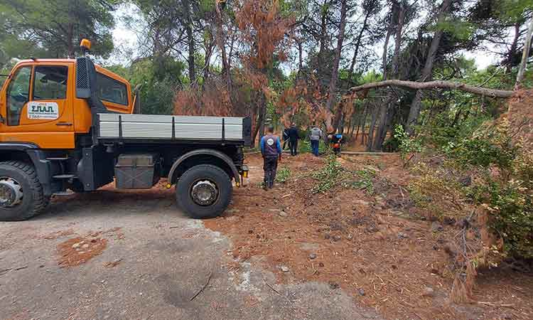 Επιχείρηση απομάκρυνσης πεσμένων δένδρων και κλαδιών από το ΝΙΕΝ από ΣΠΑΠ και Δήμο Πεντέλης