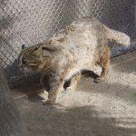 conv0006 3 150x150 - クロツラヘラサギ