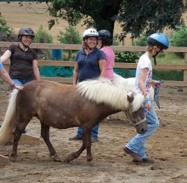 leading-minihorse_600