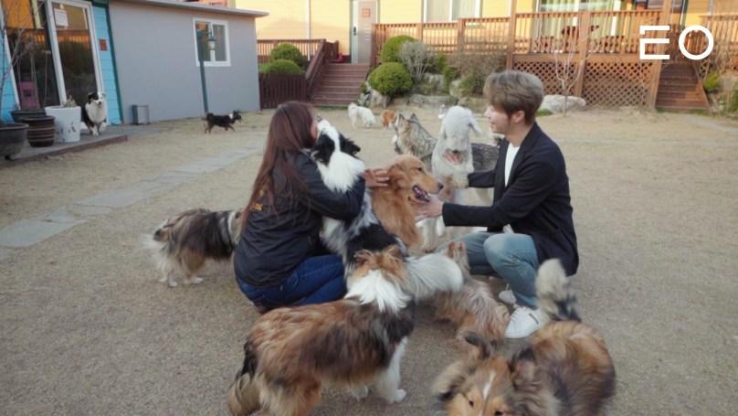 밸런스독 이근형 대표와 강아지들
