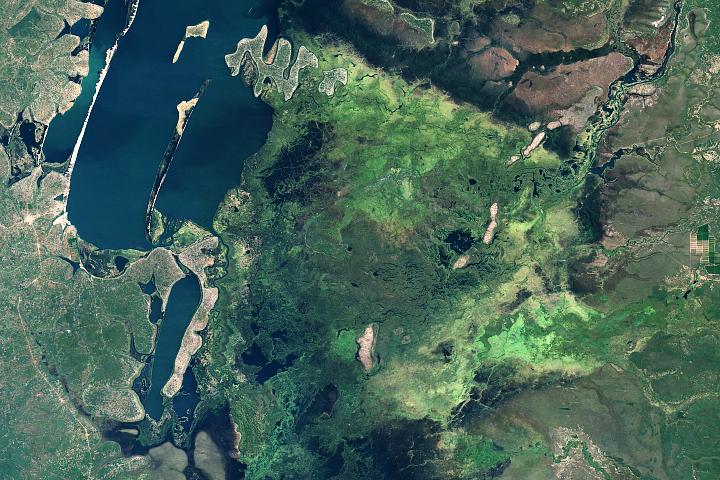 A Swampy Home for Shoebills