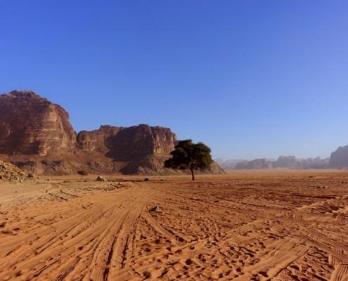 Albero della Vita nel deserto