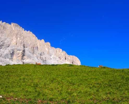 Paesaggio sentiero 526 Sassolungo
