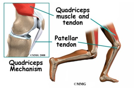 Interior Pictures Ligaments Tendons Of Knees Full Hd Maps