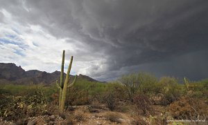 A monsoon storm developing over the Sonoran Desert, with a Saguaro in the front.