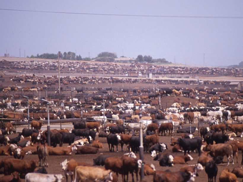 Livestock account for about a third of methane emissions in the United States, according to a new study.