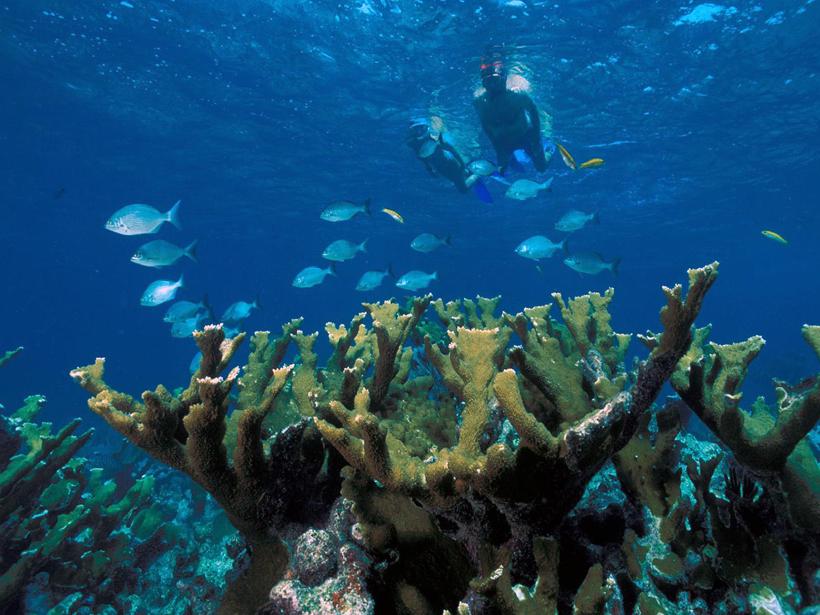 coral-reef-Biscayne-National-Park
