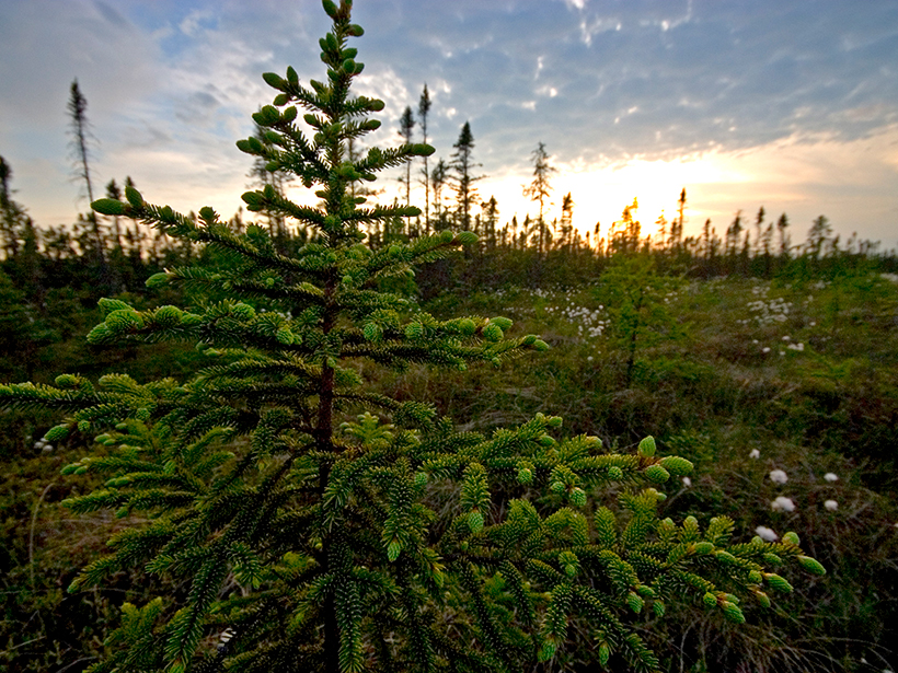 A wet climate in Minnesota led to more methane production zones in peatlands.