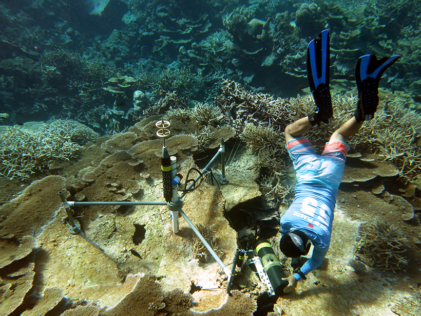 Researchers have developed a new tool to assess short-term changes in threatened coral reefs.