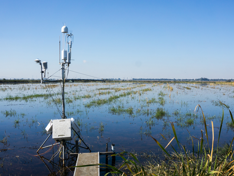 Twitchell Island, in Sacramento County, Calif., is a wetland flux site in the FLUXNET network.