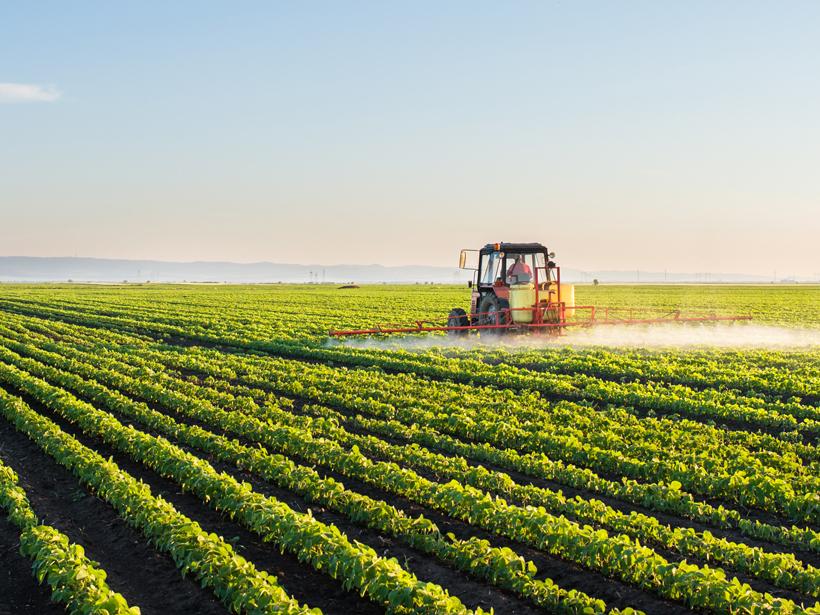 A tractor sprays a soybean field.