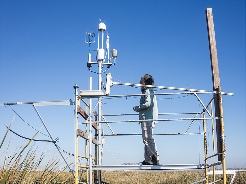 Lab technician inspecting micrometeorological tower that measures greenhouse gas, energy, and water fluxes