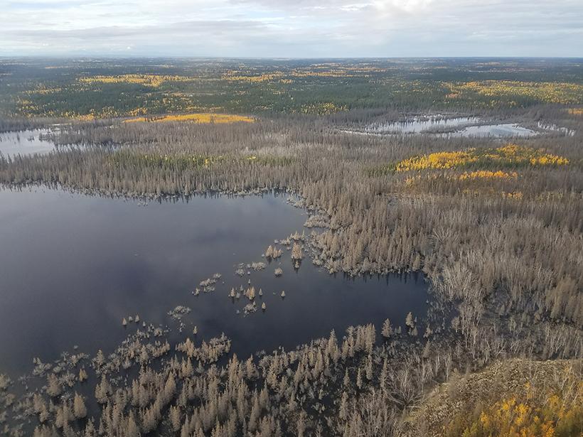Floodplain lakes and inundated forest near the Yukon River at Yukon Flats National Wildlife Refuge in Alaska.
