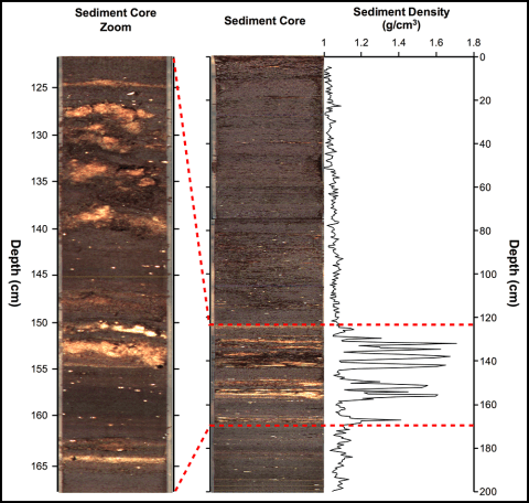 Sediment core from the Yucatán's Lake Chichancanab. White lenses are gypsum, an indicator of drought.