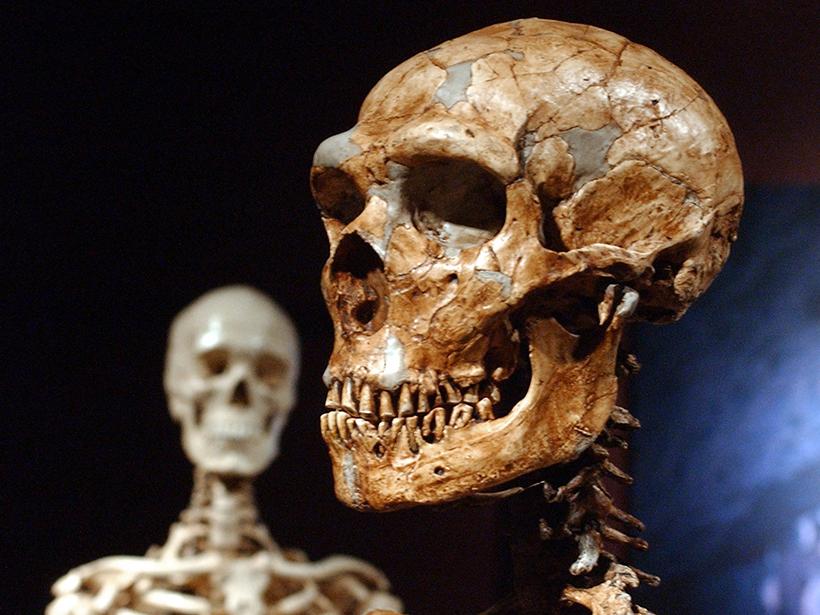 Neanderthal and human skull