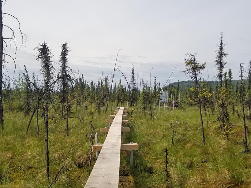 A photograph of a collapse scar bog near Fairbanks, Alaska