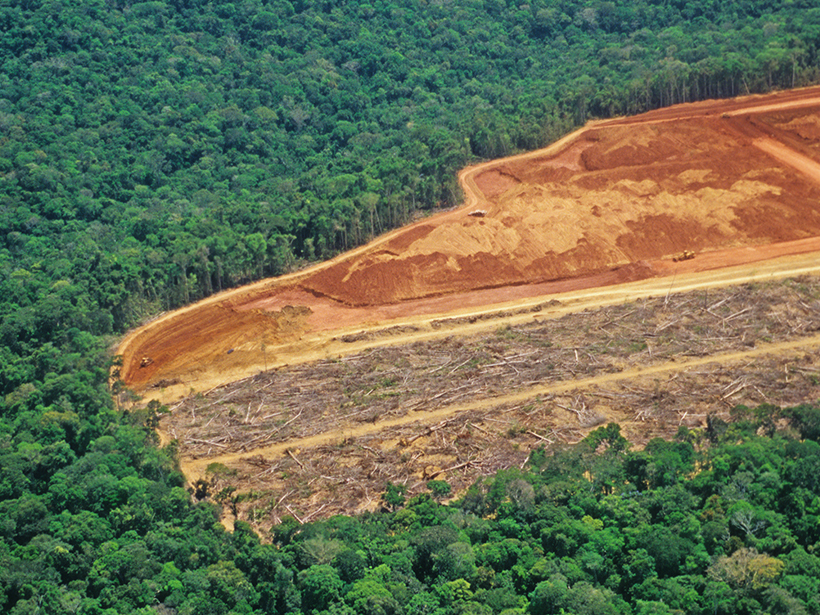 Aerial photo of a thick rain forest being logged