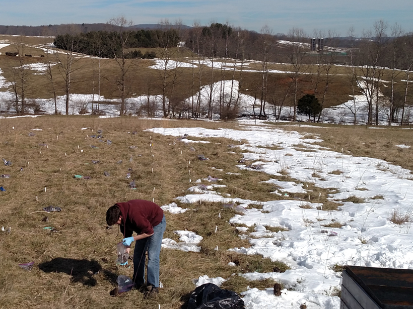 A person applies manure to an agricultural field in winter, with cattle in distance.