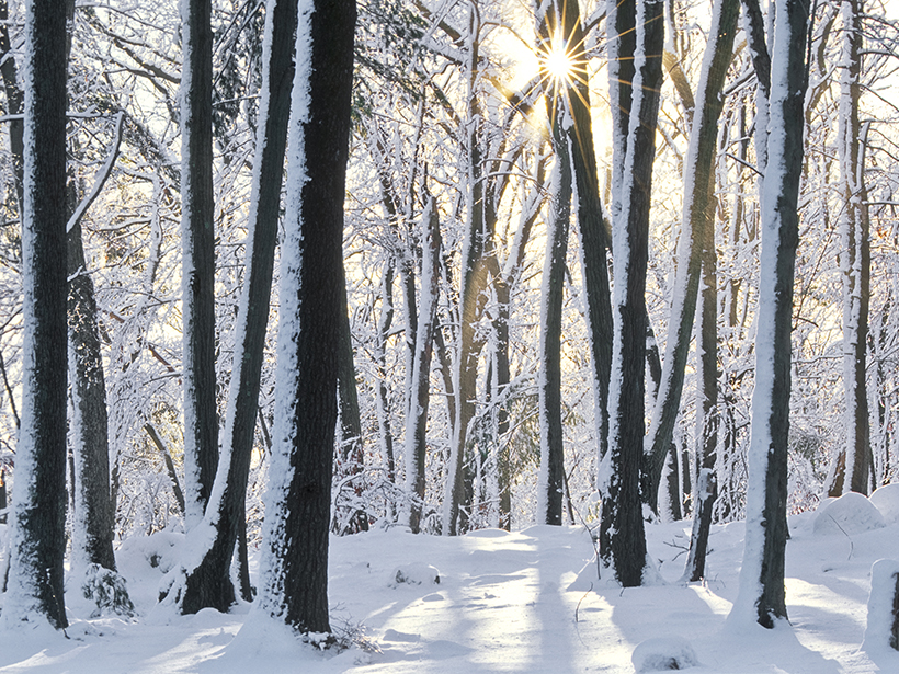 A wintry scene of a New England forest with snow on the ground