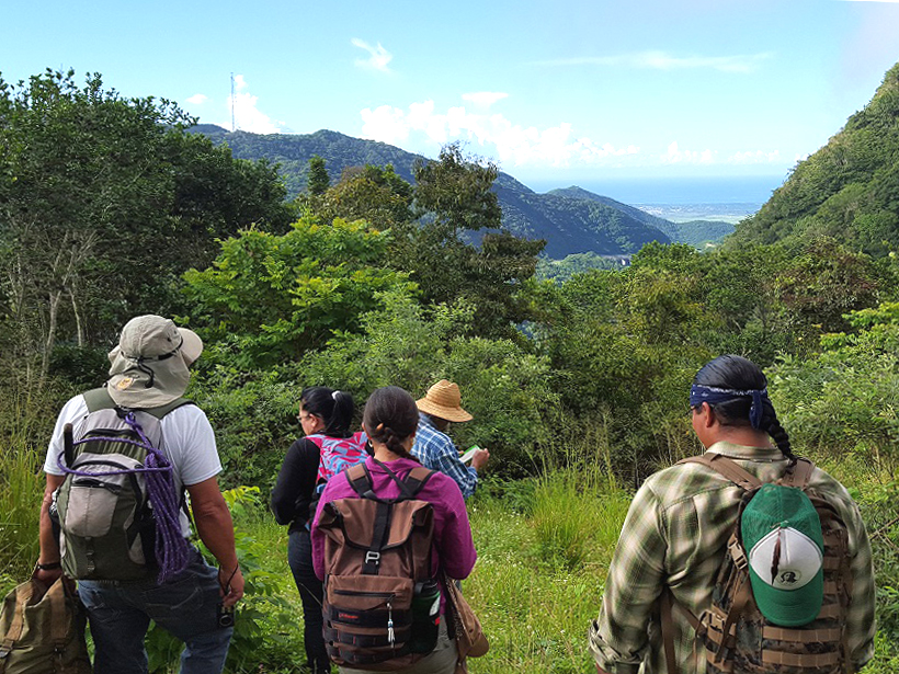 Five people hike through a green-forested area in central Puerto Rico on a sunny day.