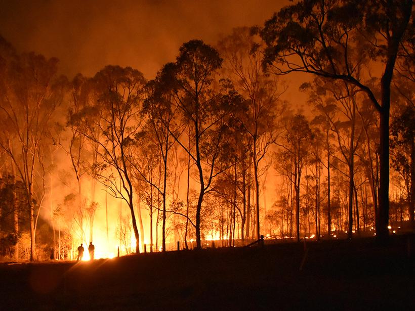 Forest fire in Queensland, Australia