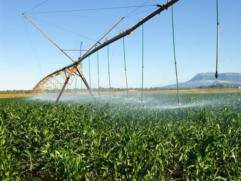 Irrigation machinery sprays water on the green vegetation of a mango farm in South Africa.
