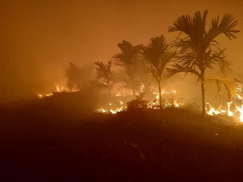 Smoke rises from burning palm trees