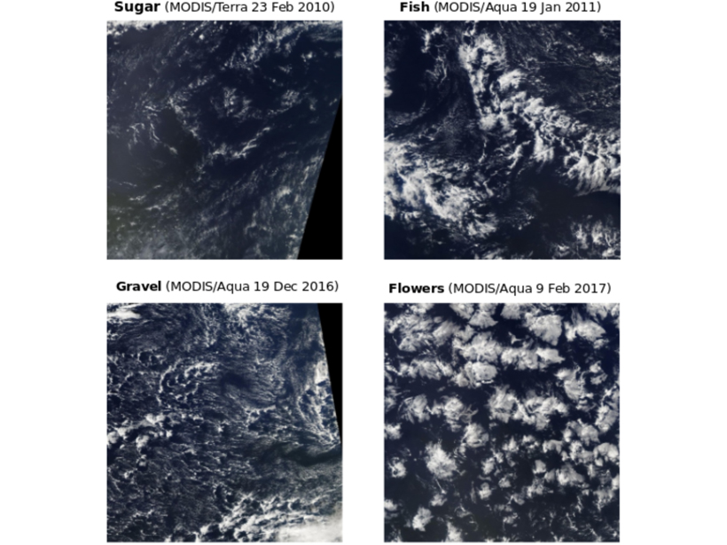 Satellite images of four types of marine shallow clouds with different patterns