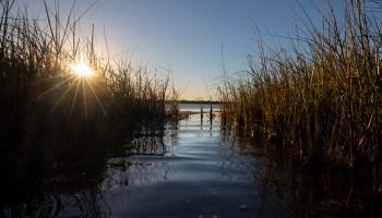 Water channel through marsh grasses in Galveston, Texas