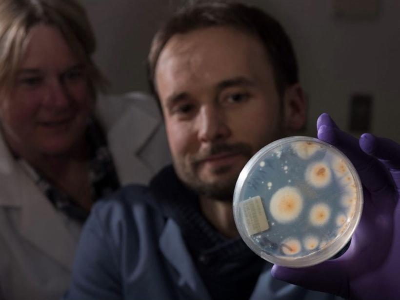 Researchers hold up petri dish of cultured fungi