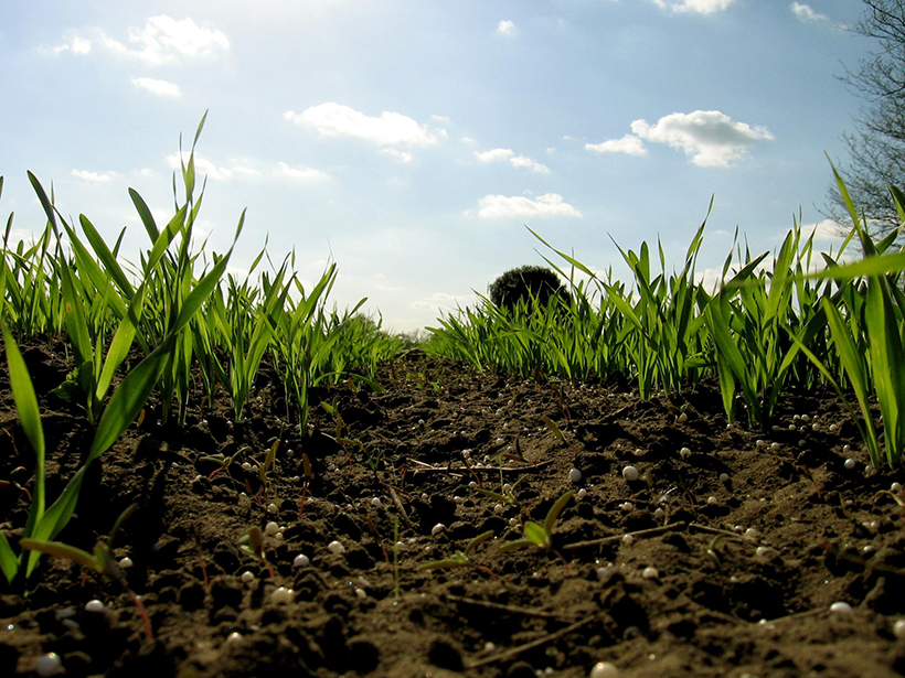 A close view of green grass, black dirt, and sunny blue sky