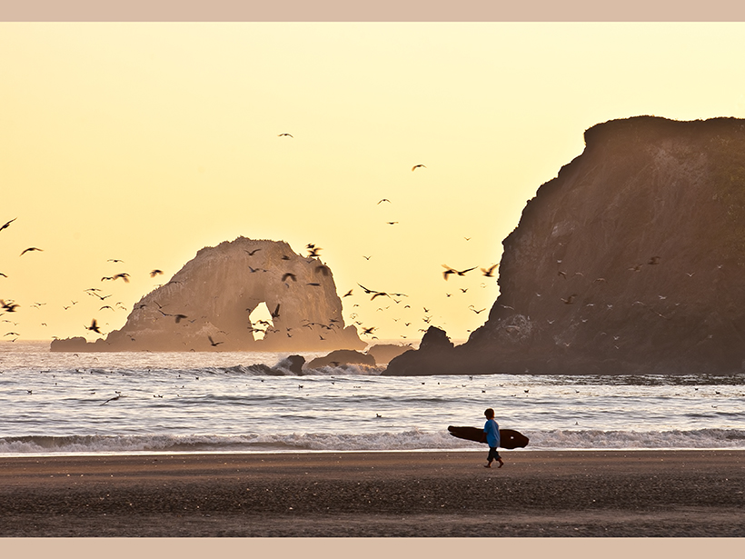 A surfer walks a gorgeous coastline with rocky outcrops and a flock of seagulls.