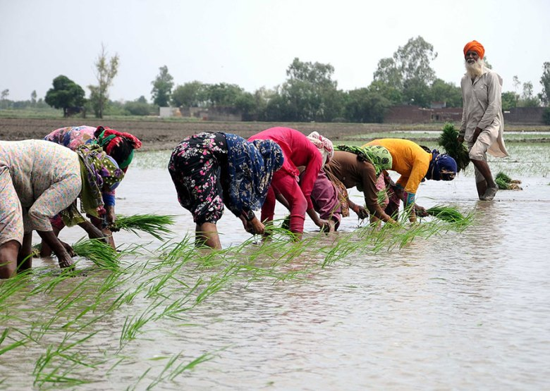 A row of women crouch to plant rice in a flooded paddy