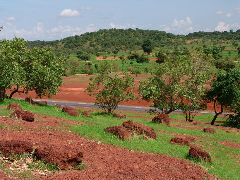 Sparse forest of acacia trees and green grasses and patches of ocher-colored soil, separated from the tree-covered hills in the background by a narrow paved road