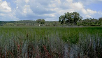 Grass and trees in a subtropical swamp on North Stradbroke Island, Queensland, Australia