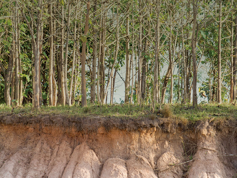 An image of many trees planted along a cliff.