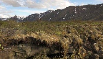 Permafrost below grass