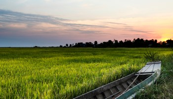 The Sun sets over a rice field in Cambodia.