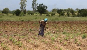 A farmer weeds her field in Morogoro, Tanzania.