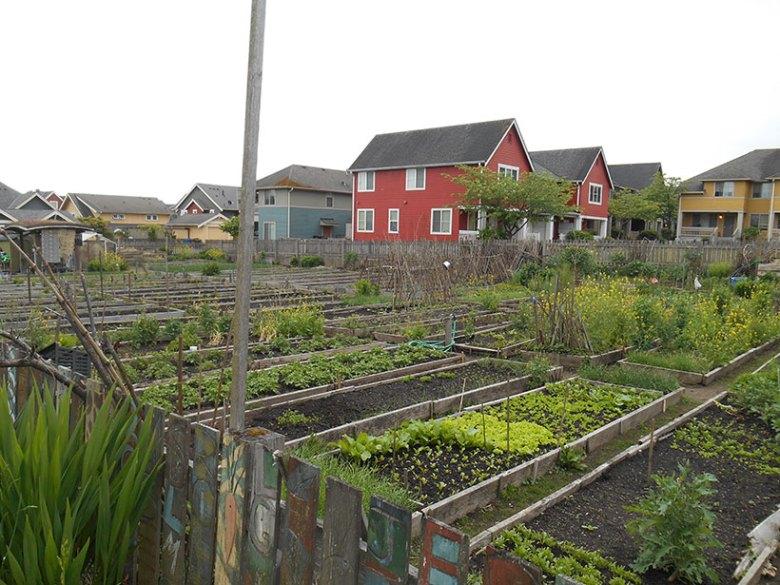 An urban farm and community garden nestles beside residences in Seattle.