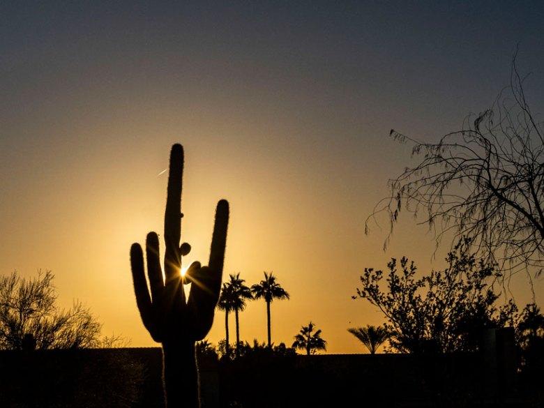 The Sun rises behind a saguaro cactus in Phoenix.