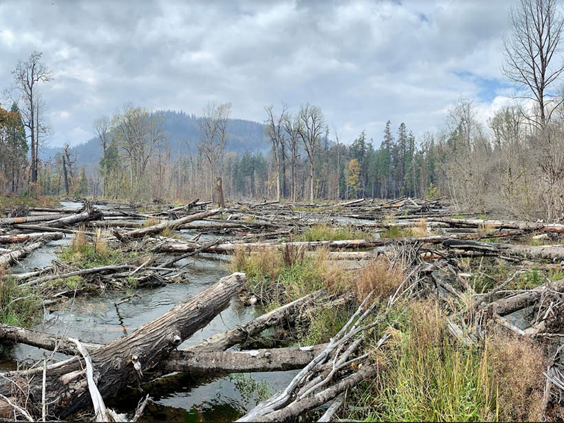 The restored floodplain of the South Fork McKenzie River in Oregon