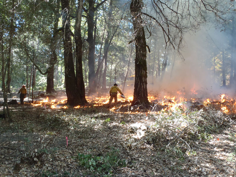 Yurok and Karuk igniters conduct traditional burning in an orchard near the Klamath River in California.